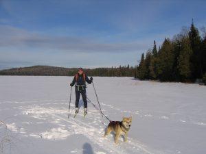 Skijoring with the dog skiing bwca Northshore Minnesota